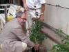 Herr Jung (Kuratorium) und Herr Karlin (Rosen-Union) pflanzen die Rose am Königsflügel des Schlosses