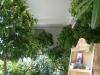 Die-Orangerie